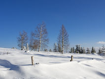 White winter forest landscape Stock Photography
