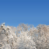 White winter forest with lot of snow Stock Photography