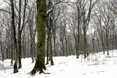 White winter forest after snowfall Stock Image