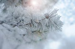 White winter frost nature background stock image