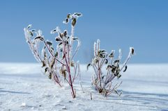 White winter frost nature background stock photography