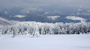 White winter landscape Stock Image