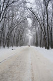 White winter landscape with forest road Royalty Free Stock Photo
