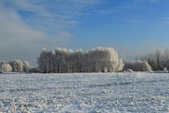 White winter landscape Royalty Free Stock Images