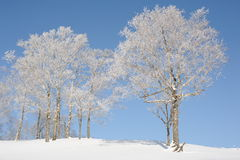 White winter landscape with a snow-covered tree Stock Photography