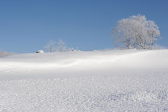 White winter landscape with a snow-covered tree Royalty Free Stock Photography