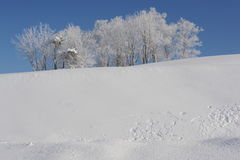 White winter landscape with a snow-covered tree Stock Photos