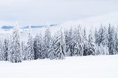 Winter landscape with snow and trees royalty free stock images