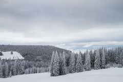 Winter landscape with snow and trees royalty free stock photos