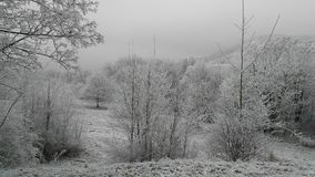 White winter landscape with trees.  Royalty Free Stock Image