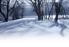 White winter morning in the park Stock Image