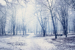 White winter in the park Royalty Free Stock Photography