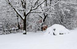 White winter scene, beautiful covered trees, bush royalty free stock photos