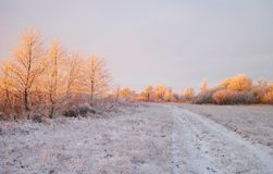 White winter trees and field , Lithuania Stock Images