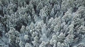 White winter trees in forest. Snowy winter forest with white beautiful trees in the deep faraway stock video