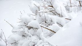 White winter, white snow in Montreal Royalty Free Stock Photo