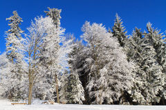 White Winter Wonderland. In the woods royalty free stock photography