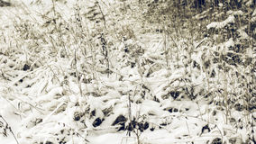 White Wintry Wonderland Stock Photography