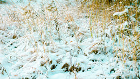 White Wintry Wonderland Stock Images