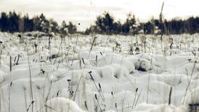 White Wintry Wonderland Stock Image