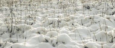 White Wintry Wonderland Royalty Free Stock Photo