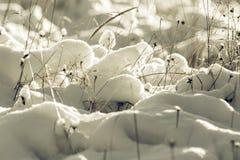 White Wintry Wonderland Royalty Free Stock Photos