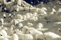 White Wintry Wonderland Royalty Free Stock Image