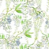 White wisteria flower. Watercolor illustration. Seamless background. Stock Photo