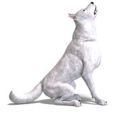 White Wolf. 3D rendering with clipping path and shadow over white Royalty Free Stock Photos
