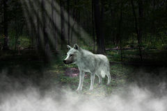 White Wolf, bosque, Forest Illustration Imagen de archivo