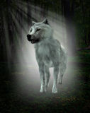 White Wolf, Forest Illustration. A white wolf lurks in the deep woods of a forest. The illustration highlights wildlife in it's natural environment and habitat Royalty Free Stock Photography
