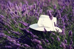 White woman`s hat on violet lavender bushes. Summer landscape near Valensole in Provence, France. Lilac lavender field. Nature background with copy space Royalty Free Stock Image