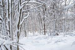 White Wonderland Stock Images