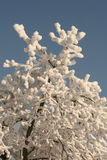 White wood. Snow cover the village, frozen branches of the tree Royalty Free Stock Photo