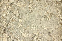 White wood ash  background Royalty Free Stock Image