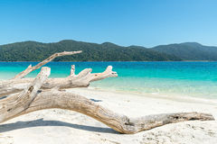 White wood on the beach near tropical sea in Phuket, Thailand Stock Photography
