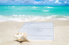 White wood board with seashell on the sandy beach Stock Photos