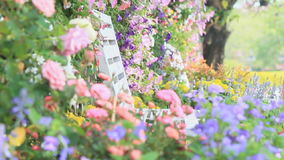 White Wood Chair In The Flowers Garden, HD Vdo. Stock Video Footage