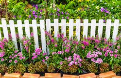 In home garden. White wood fence and flower decoration in cozy home garden on summer royalty free stock photo