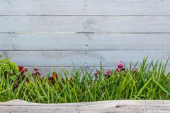 White wood with grass and a trunk royalty free stock images