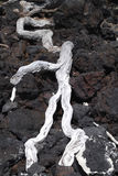 White wood on lava. Beach in Hawaii Royalty Free Stock Photo