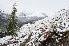 White wood, road and snow. Royalty Free Stock Photos