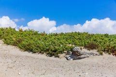 White wood on sandy beach under blue sky royalty free stock photo