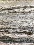 White Wood Texture. In Ayala Triangle Park, Makati Royalty Free Stock Image