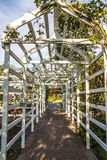 White Wood Trellis in Rose Garden. A white wood trellis in a public rose garden Royalty Free Stock Photography
