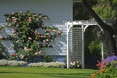 Beautiful pastel Colour Tones of Pale Blue Weather-Boards, and a Pink Climbing Rose. White Wooden Arch, as the focal point of this colourful Garden. Beautiful royalty free stock image