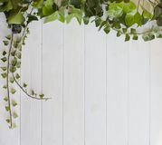 White wooden background with leaving green ivy branches stock images