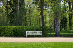 White wooden bench in Lazienki park Royalty Free Stock Photo