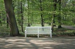 White wooden bench in Lazienki park Stock Photos