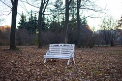 White wooden bench in a park in spring. / Ufa stock photo
